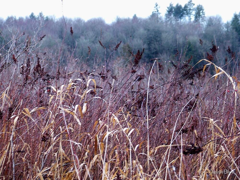 Field of Dreams by DeeprBlue