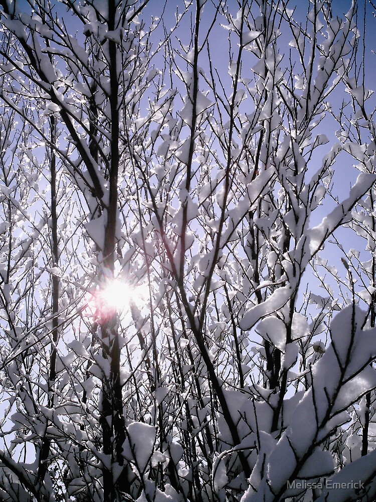 A ray of warmth in the cold by Melissa Emerick