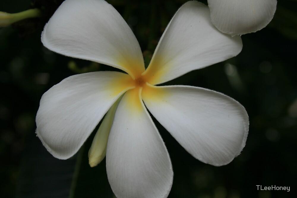 frangipani by TLeeHoney