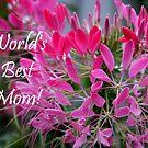 Pink Cleome - World's Best Mom! by Judi FitzPatrick