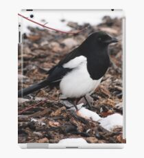 Magpie's Winter Forage iPad Case/Skin