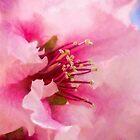 Springtime impressions by Celeste Mookherjee