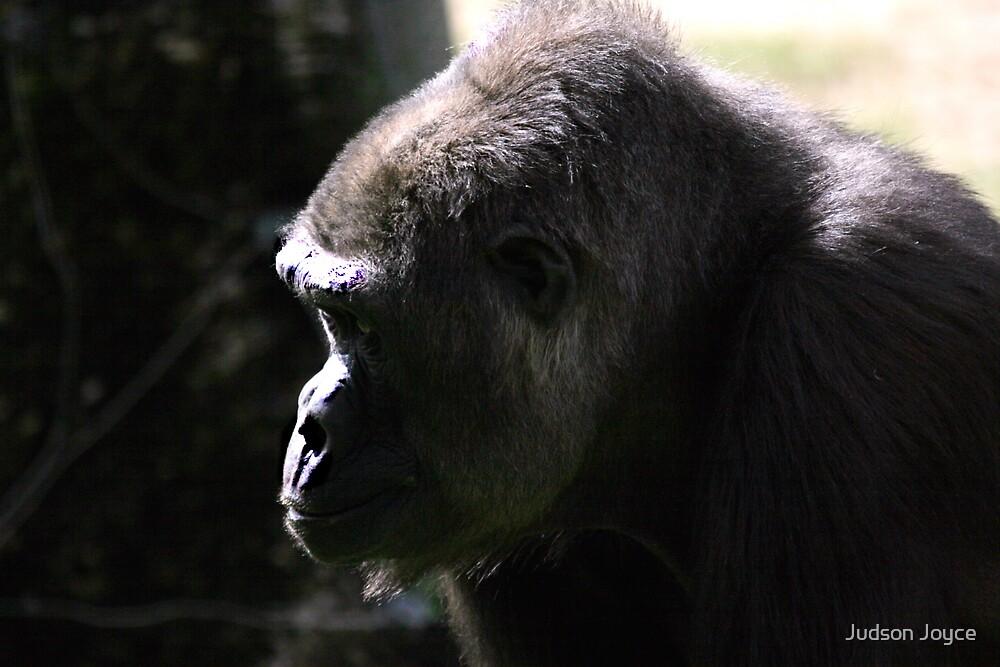 Western Lowland Gorilla by Judson Joyce