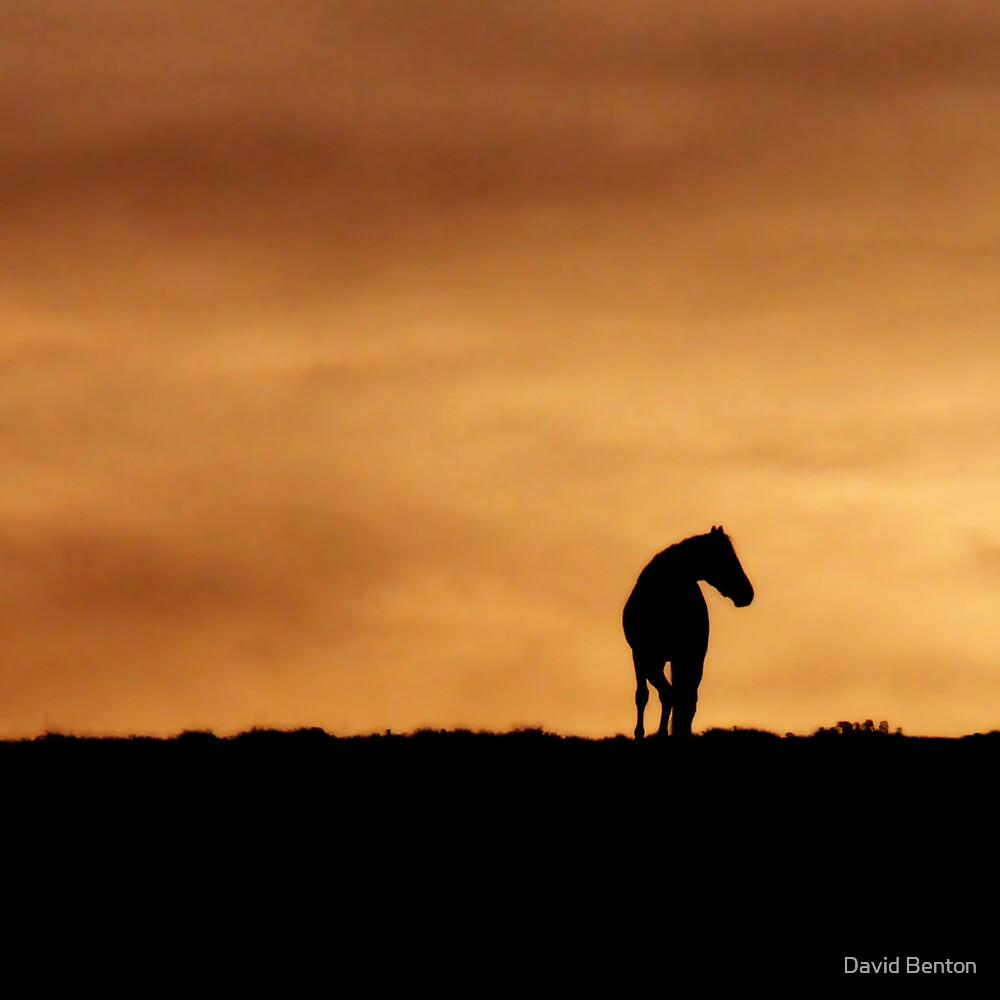 Dark Horse by David Benton