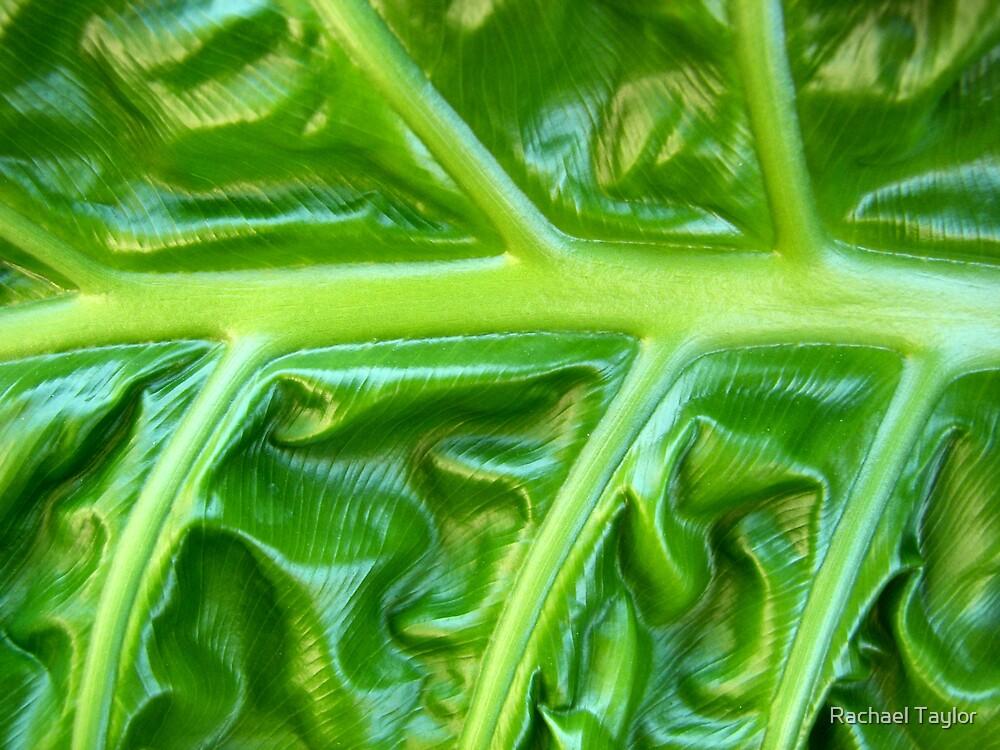 Leaf by Rachael Taylor