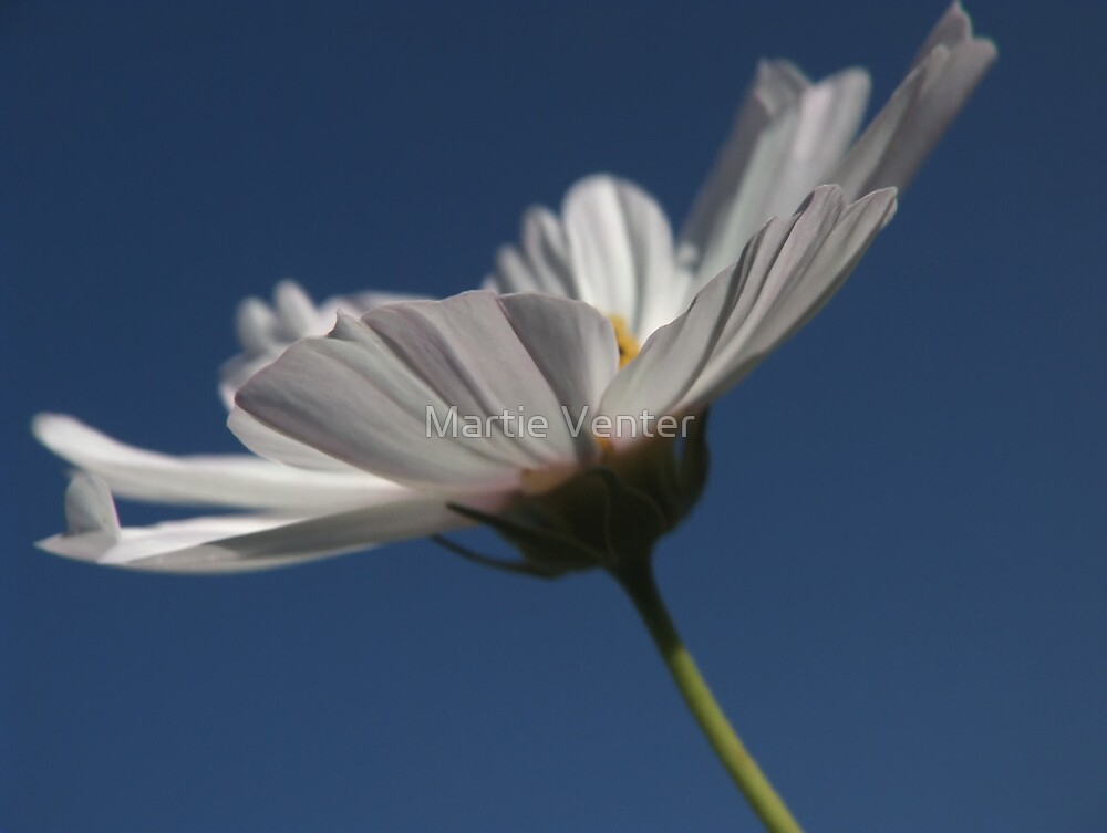 White and Blue by Martie Venter