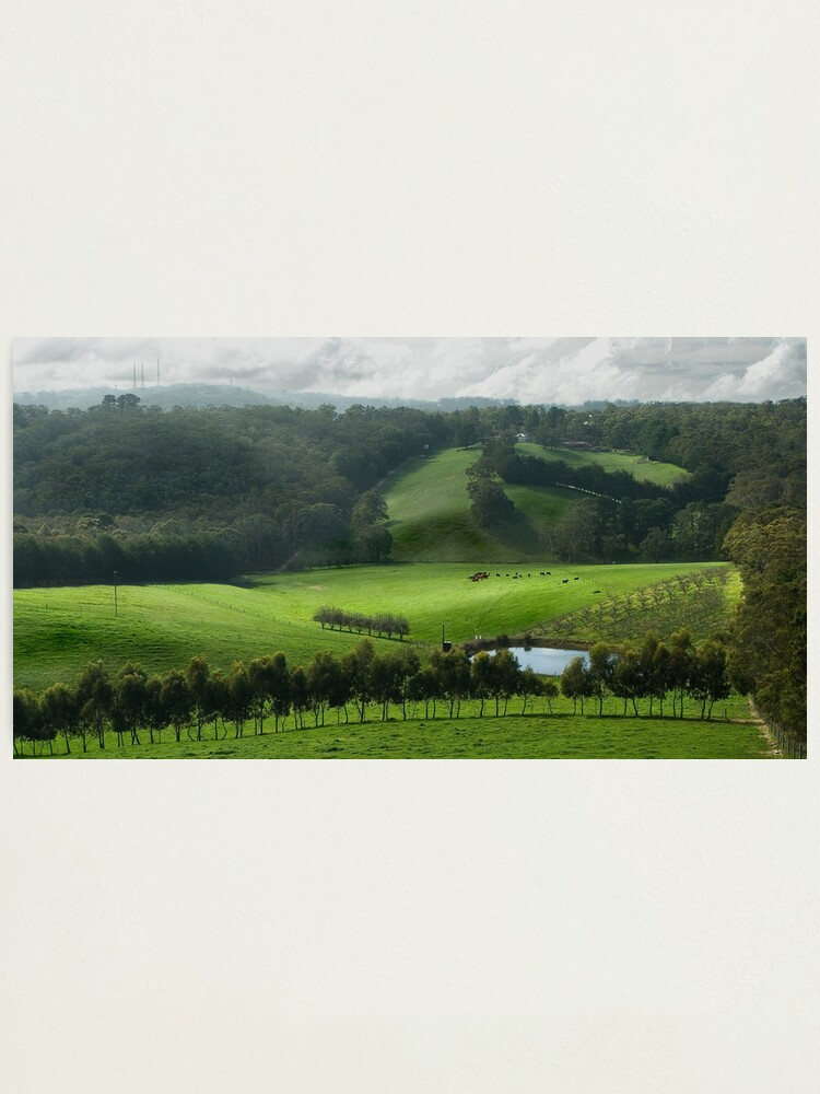 Alternate view of Adelaide Hill's in Green. Photographic Print