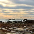 Low Tide At Laguna Beach by K D Graves Photography