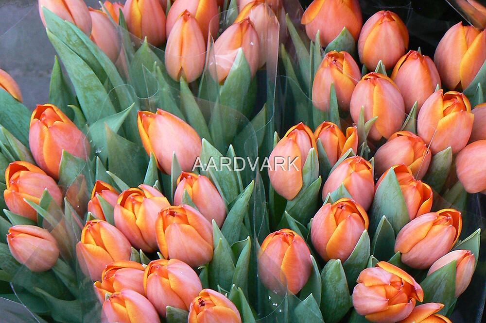 Tulips - York Market by AARDVARK