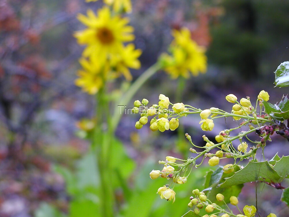 Even More Yellow Flowers 2 by TimsWorld