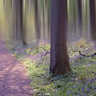 Enchanted Forest by Cat Perkinton