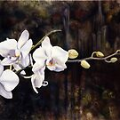 Orchids by Matthew  Bates