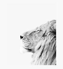 Minimal lion print Photographic Print