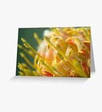 Proteaceae Leucospermum aka Pincushion 1 Greeting Card