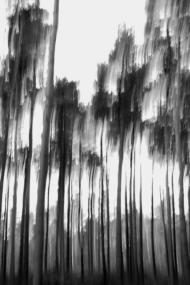 A forest by Phil Whiting