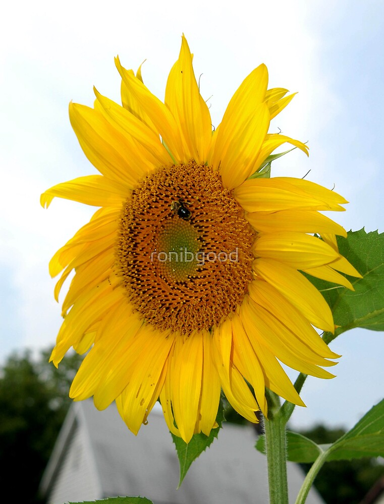 Sunny Flower by ronibgood