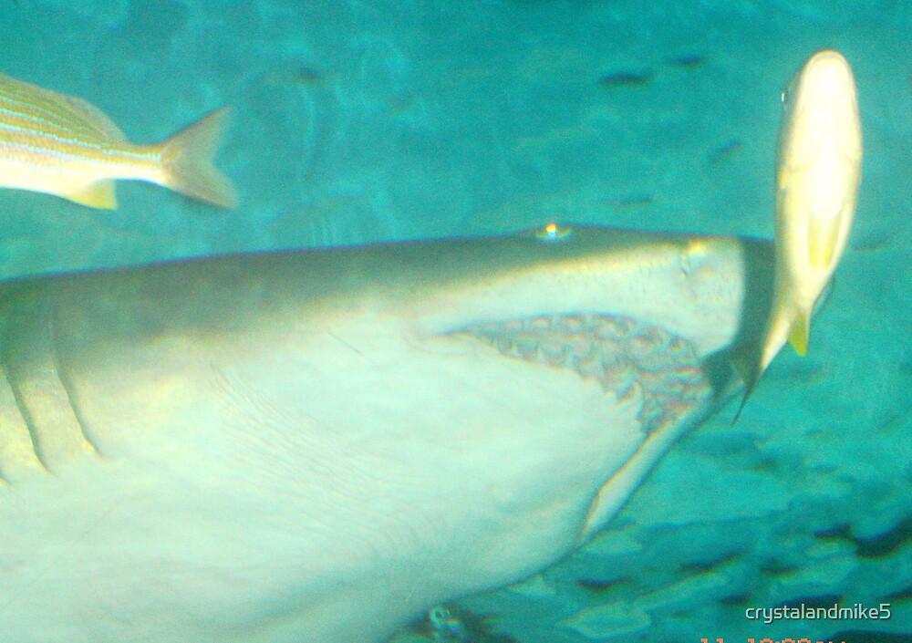 shark by crystalandmike5