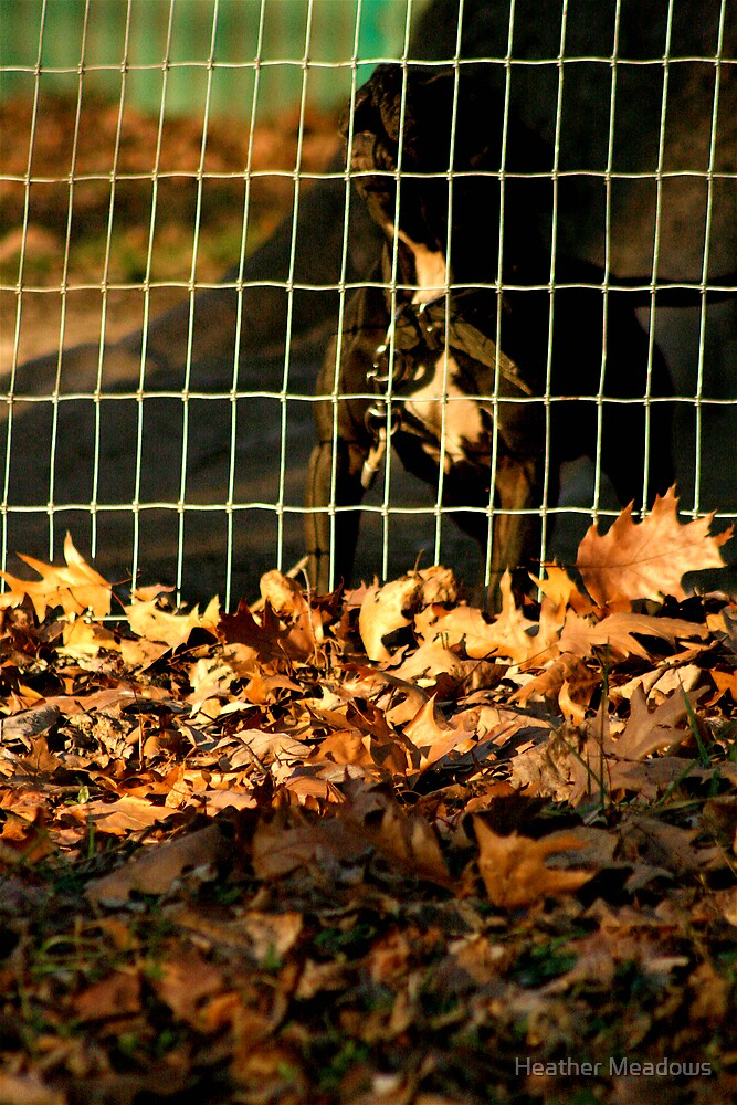 Guard Dog by Heather Meadows
