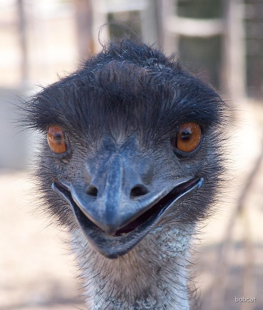 flirty ostrich by bobcat