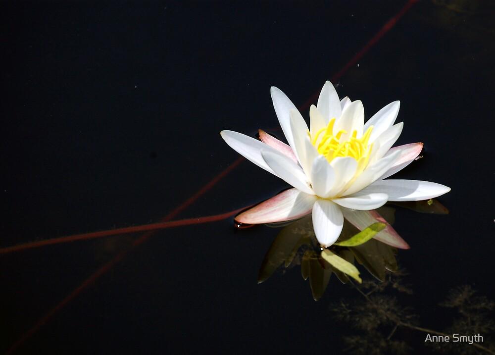 Wild Lily by Anne Smyth