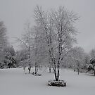 winter wonderland by storm22