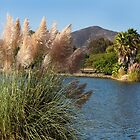 Pampas Grass At Lake Murray, California  by Heather Friedman