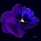 Purple Pansy by Rosemary Sobiera