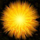 Dandelion Fire by Mandy Collins