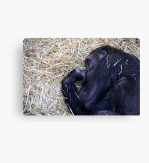 Gorilla Sleeping Canvas Print