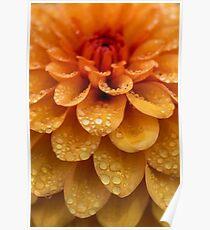 Dahlia Orange Flame Petals Poster