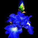 Iris of my eye! by Rosemary Sobiera