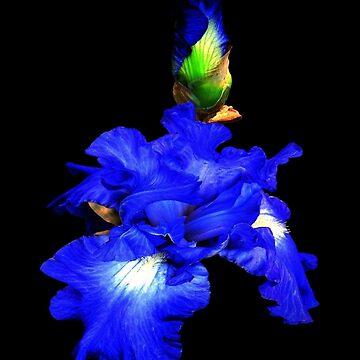 Iris of my eye! by rsobiera