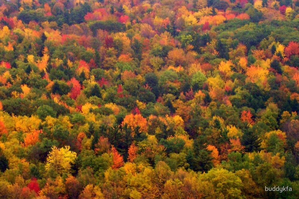Fall in Ohio by buddykfa