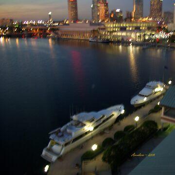 Tampa Yachts by Amedori