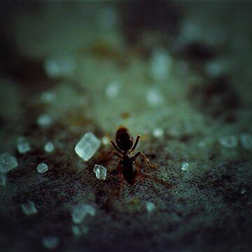 Sweet like Ants by MrsScoops