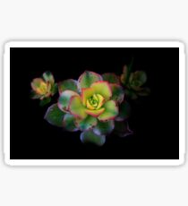 Succulent Flower Sticker