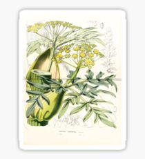 Flore Des Serres Et Des Jardins De L'Europe 1861 078 Narthex Asafoetida Sticker