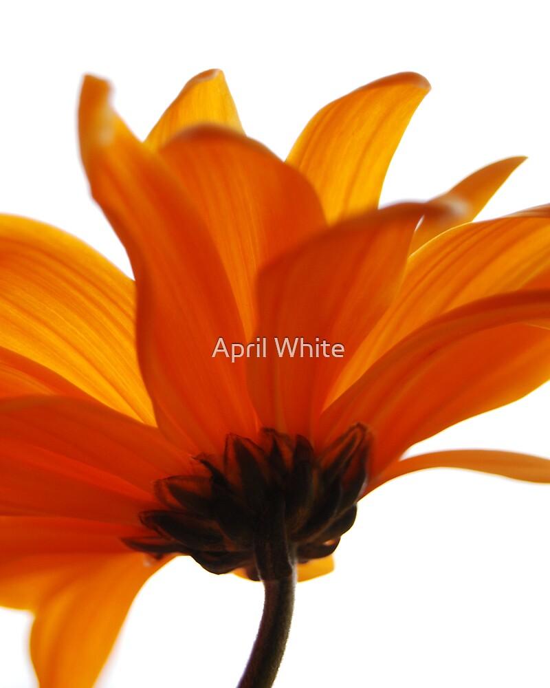 Orange Sherbert by April White