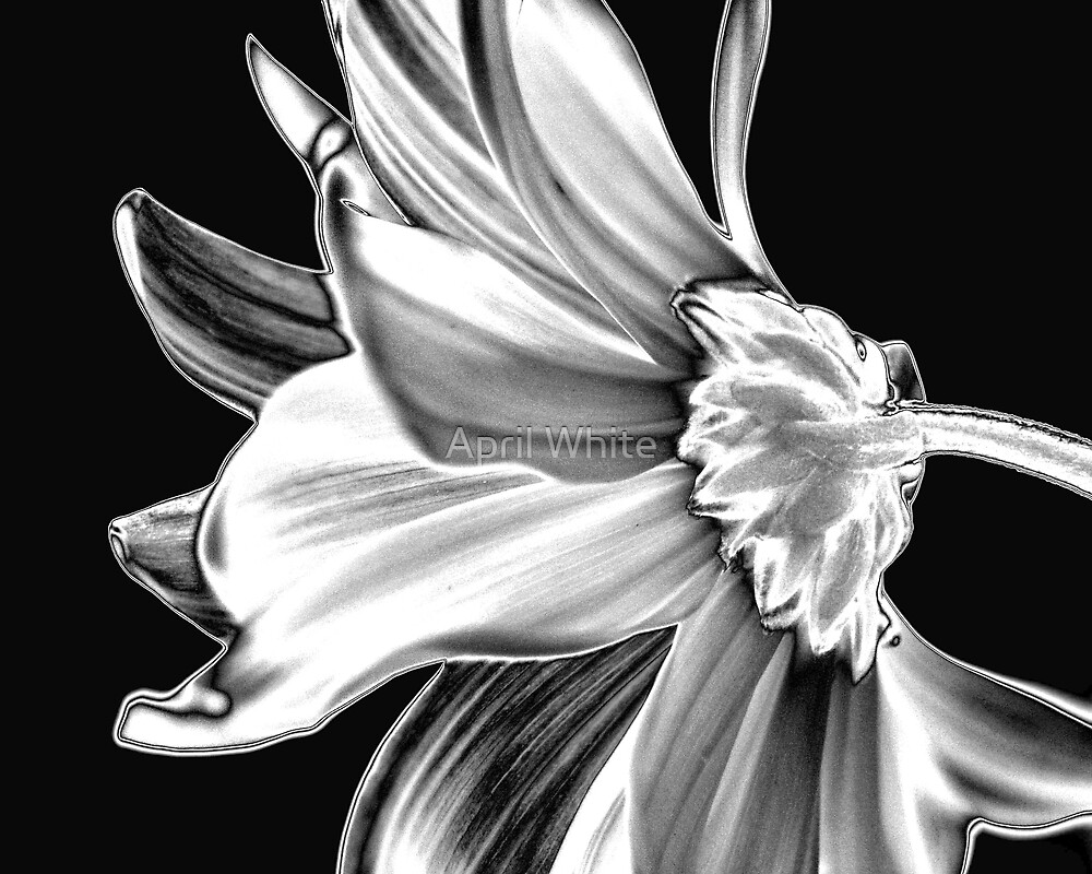Elegance  by April White