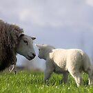 A Mothers Love by Jo Nijenhuis