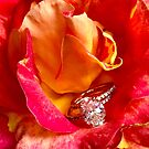 Rings and Roses by Christine  Wilson