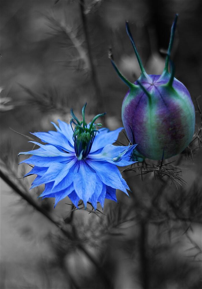 Blue by jlc9175