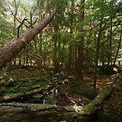 Stream, Sullivan County, New York by HelenB