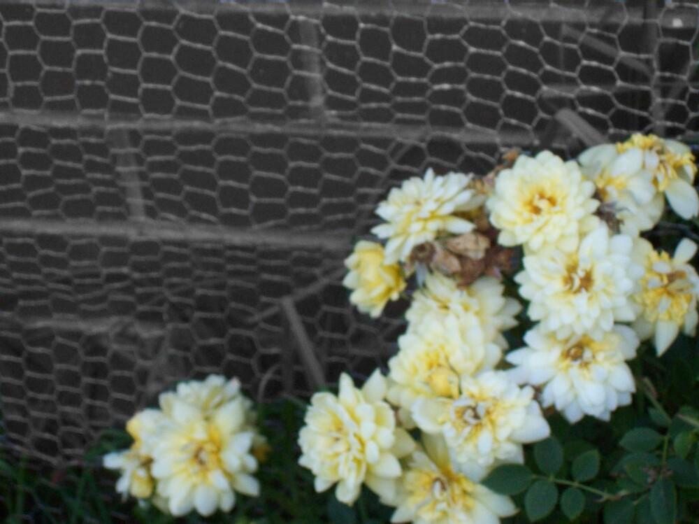 Nature v Nurture by Kalinda