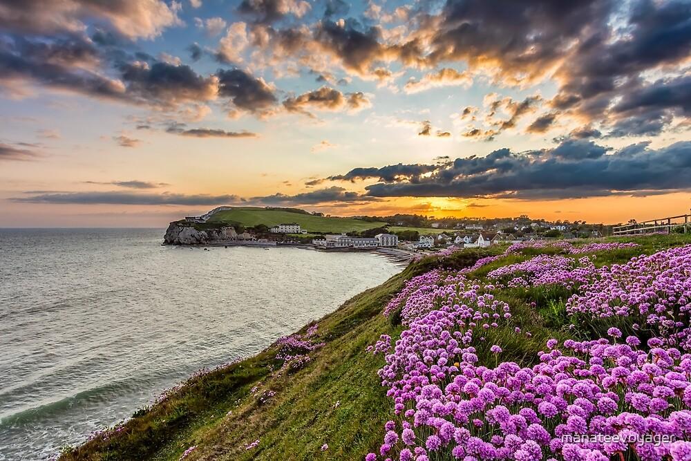 Freshwater Bay Sea Thrift Sunset by manateevoyager
