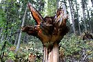A Downer - Tree Stump In Forrest  by Sandra Foster