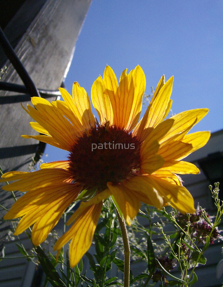 You Are My Sunshine... by pattimus