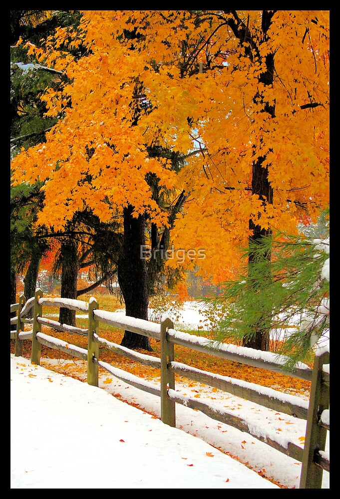 Fall Into Winter by Bridges