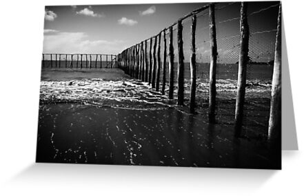 Stinger Nets by Rossman72