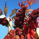 Spicy Sumac by Rosemary Sobiera